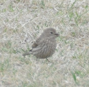 dsc_5238-sparrow
