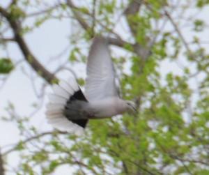 dsc_5253-dovefly