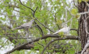 dsc_5255-doves
