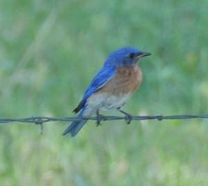 dsc_6226_blue