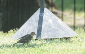 dsc_6344-bird