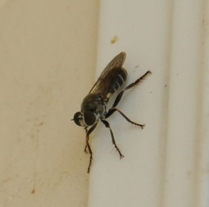 dsc_6357-fly