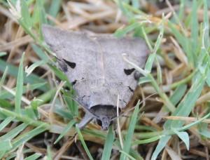 dsc_6395-moth