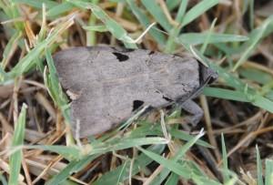 dsc_6400-mothside
