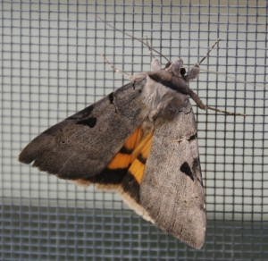 dsc_6444-mothscreen