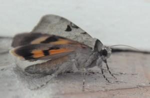 dsc_6485-mothside
