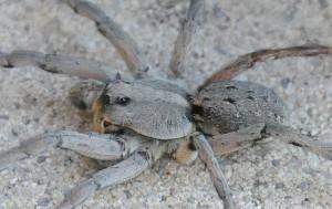 dsc_6722_spider2