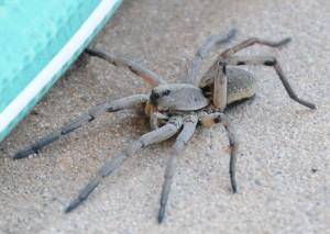 dsc_6744-spider