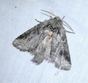dsc_2706-moth