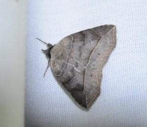 dsc_8400-moth