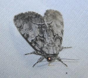 dsc_8881-moth