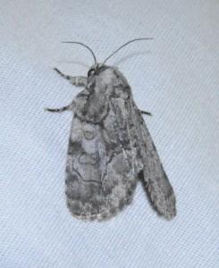 dsc_9754-moth