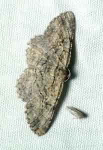 dsc_0445-moth