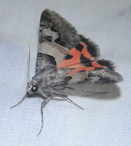 dsc_1165-moth
