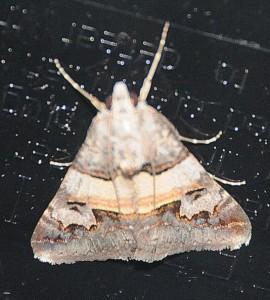 dsc_1200-moth