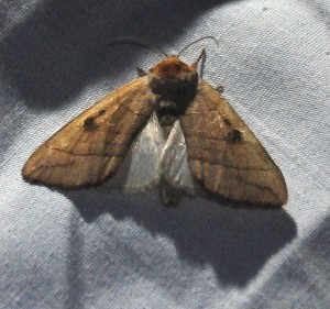 dsc_1605-moth