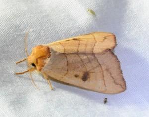 dsc_1629-moth