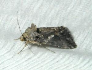 dsc_1667-moth