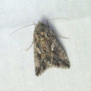 dsc_1681-moth