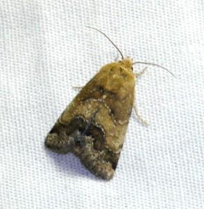 dsc_1730-moth