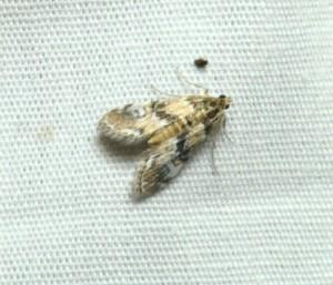 dsc_1757-moth