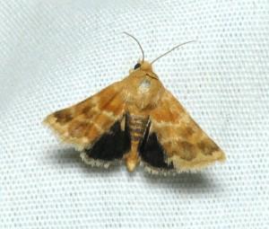 dsc_1775-moth