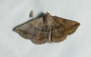 dsc_1846-moth