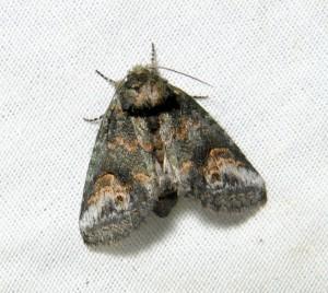 dsc_1926-moth