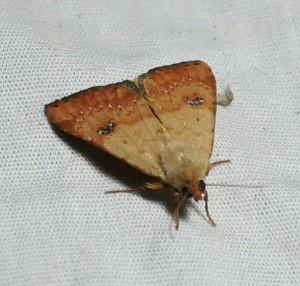 dsc_2075-moth