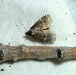 dsc_2126-moth