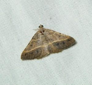 dsc_2190-moth