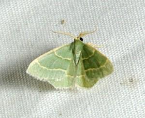 dsc_2228-moth