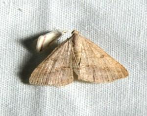 dsc_2233-moth