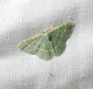 dsc_2257-moth