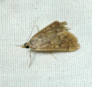 dsc_2311-moth