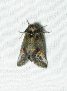 dsc_2338-moth