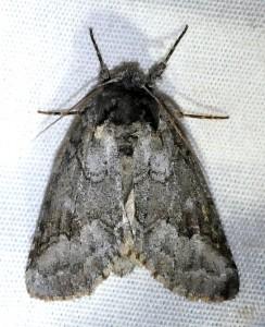 dsc_2884-moth