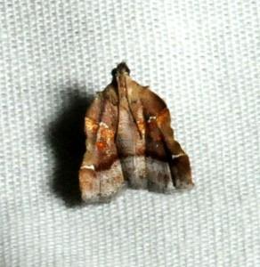 dsc_3708-moth