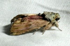 dsc_4626-moth