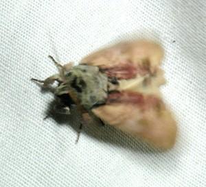 dsc_4645-moth