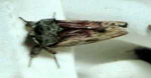 dsc_4679-moth