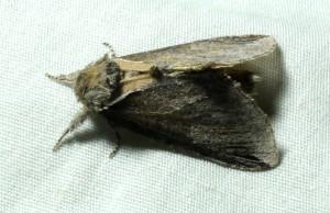 dsc_5258-moth