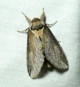 dsc_5300-moth