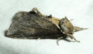 dsc_5319-moth