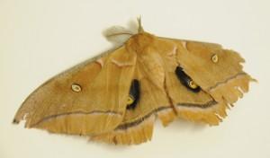 dsc_9583-moth