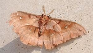 dsc_9593-moth
