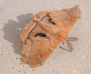 dsc_9596-moth